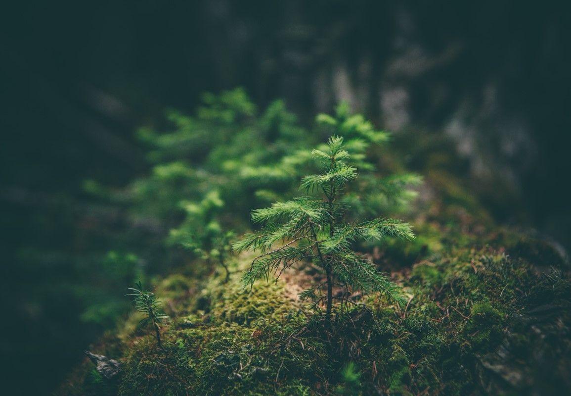 Miljöcertifieringssystemet BRE Environmental Assessment Method (BREEAM) från Storbritannien är utvecklat och administrerat av the Building Research Establishment (BRE). Sweden Green Building Council (SGBC) har anpassat BREEAM till svenska förhållanden, BREEAM-SE. Nu är BREEAM i självständig drift.